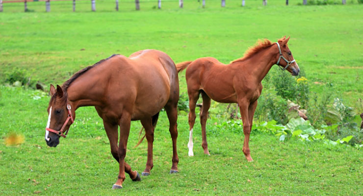 馬の購入方法